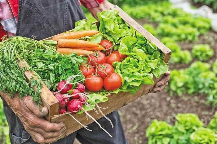 سبزیجات در رژیم کتوژنیک